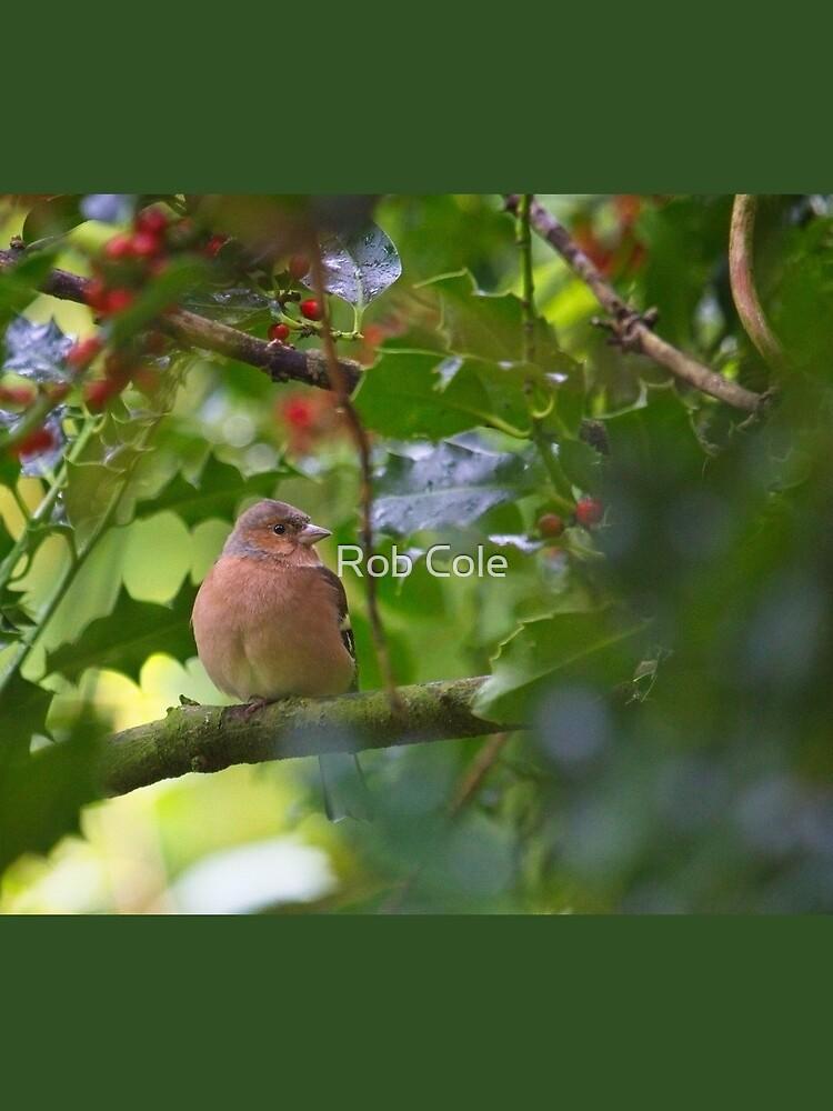 Chaffinch (Fringilla coelebs) by robcole