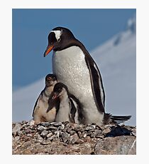 Gentoo Greetings from Antarctica Photographic Print