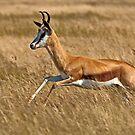Sprinter (II) by Konstantinos Arvanitopoulos