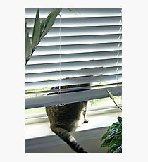 Curious Cat, Sneaking a Peek Photographic Print