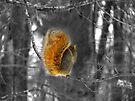 Camera Shy  by Marcia Rubin