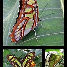 Butterfly (South America) ~ Malachite by Kimberly Chadwick