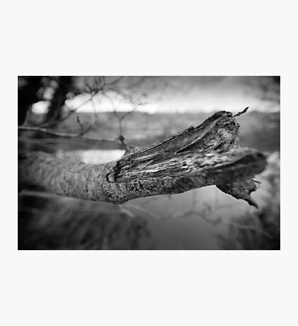 What's Black & White And Sticky... Photographic Print