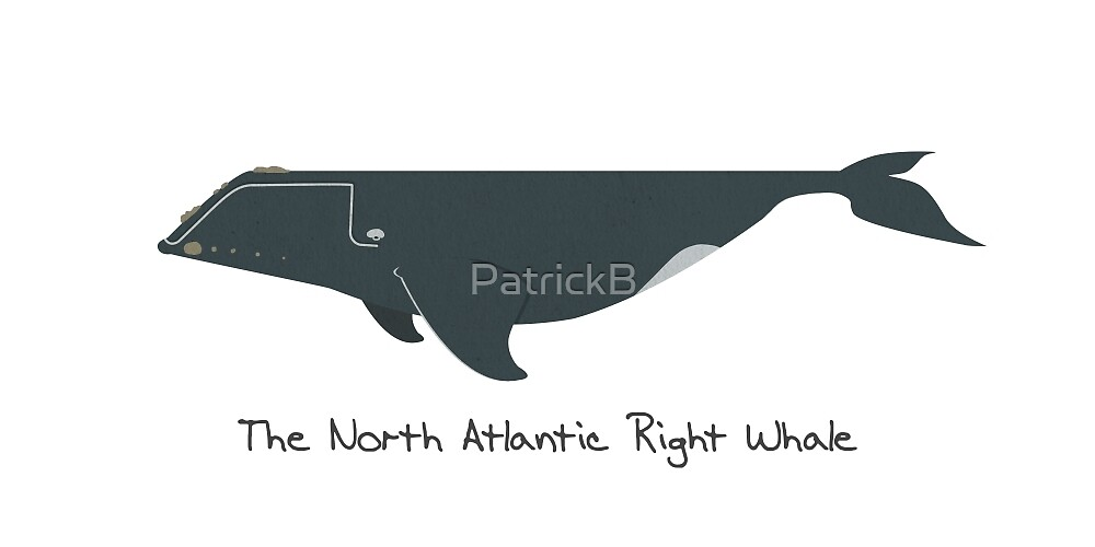 The North Atlantic Right Whale by PatrickB