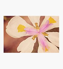 Up Close Photographic Print