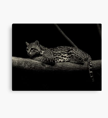 Predator of the Night (Ocelot) Canvas Print