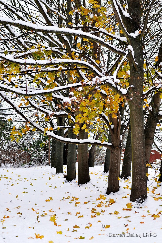 Colour in the snow by Darren Bailey LRPS