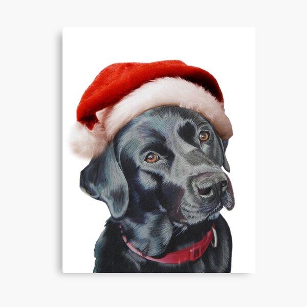 Black Labrador at christmas Canvas Print