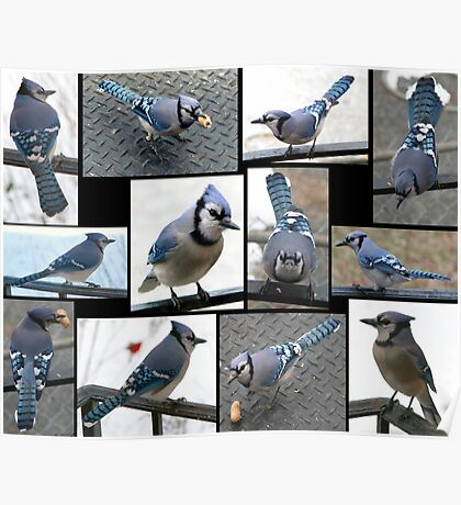 Jazzy Blue Jays Poster