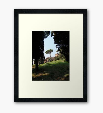 Looking Under the Umbrella Tree Framed Print