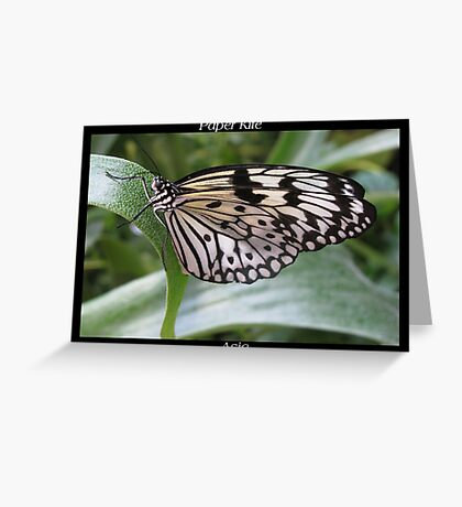 Butterfly (Asia) ~ Paper Kite Greeting Card