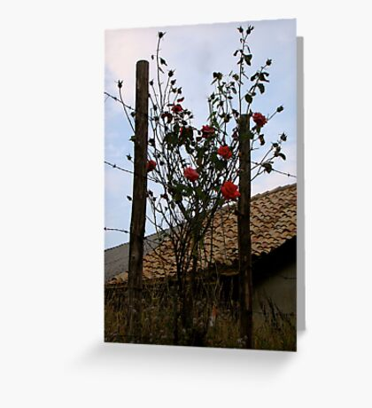 Barbe Wire Roses Greeting Card