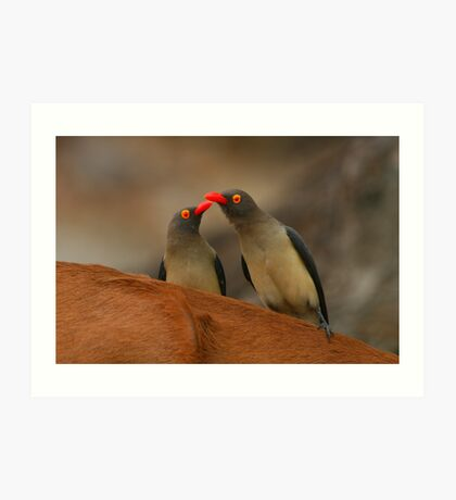 Red-billed Oxpeckers Art Print