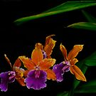 Cattleya Orchid by Winston D. Munnings