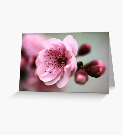 Cherry Pink Greeting Card