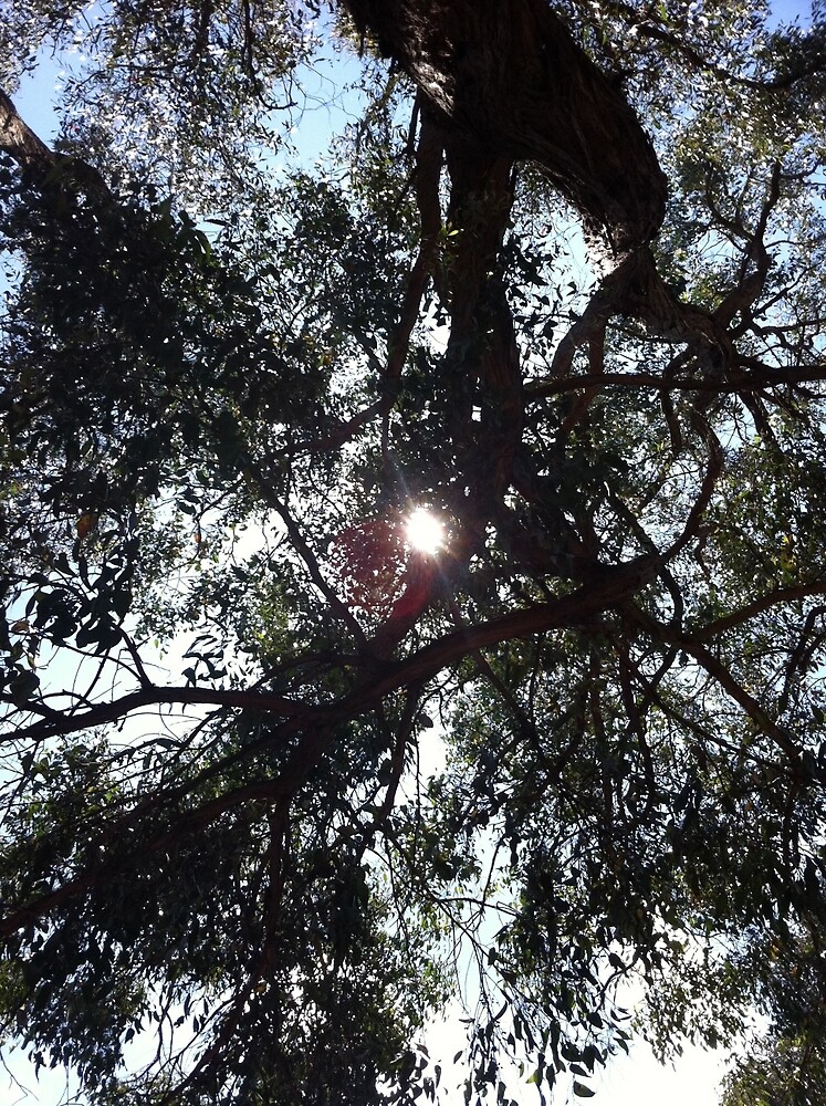 Branches blocking the sun's rays by FatLikeSnorlax
