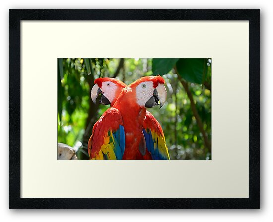 Pair of Rainbow Coloured Forest Scarlet Macaw Parrots by HotHibiscus