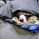 Dumper (street seller's dog) by armadillozenith