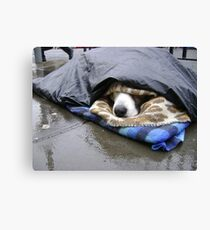 Dumper (street seller's dog) Canvas Print