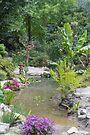 The Rock Garden by Elaine Teague