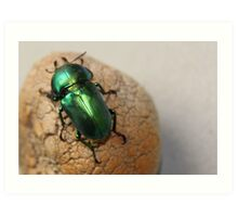 Iridescent Green Christmas Beetle Art Print