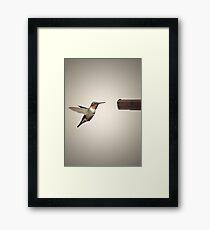 The Hummingbird and the Handgun. Framed Print