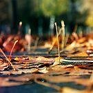Autumn Rain by James McKenzie
