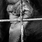 monkey's meal time by keki