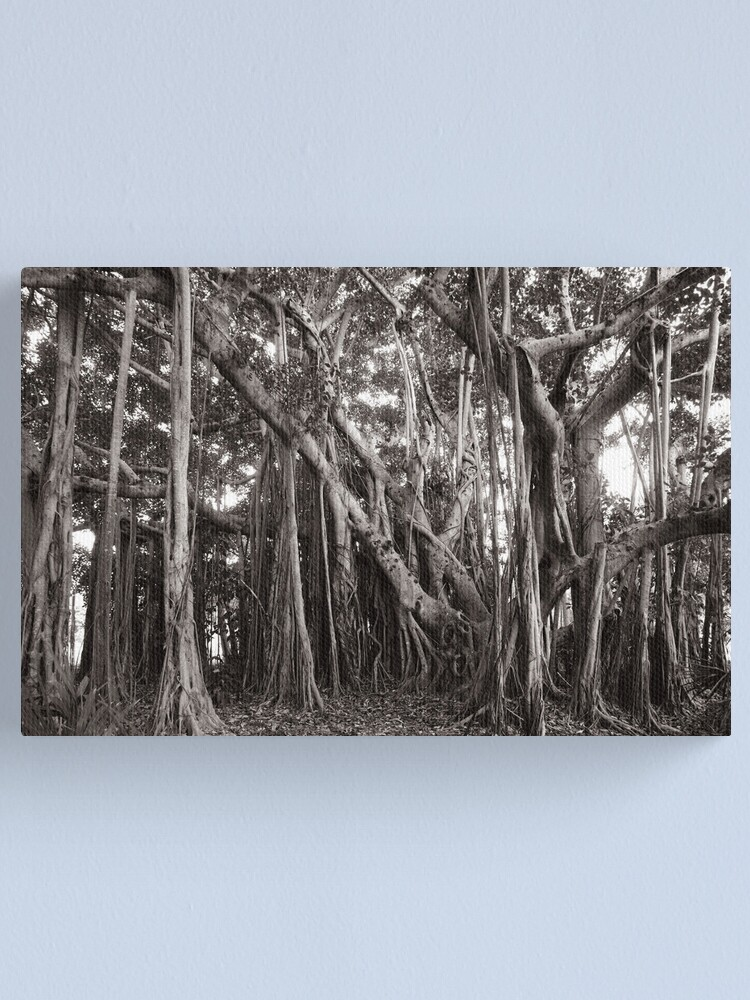 Alternate view of Banyan Tree with Aerial Roots Canvas Print