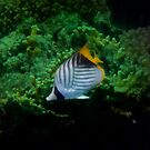 Threadfin Butterflyfish Of The Red Sea Green Theme by hurmerinta