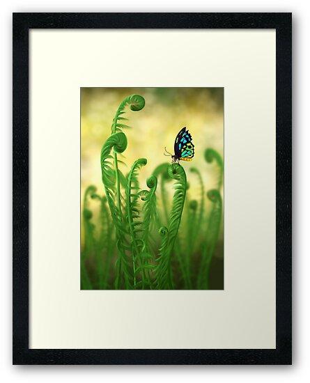 Schmetterling by unikatdesign