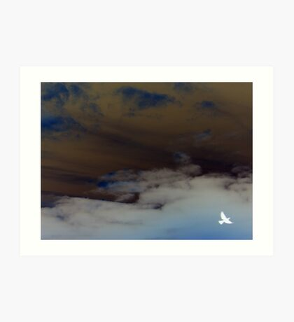 hope (clouded sky, white bird flying free) Art Print