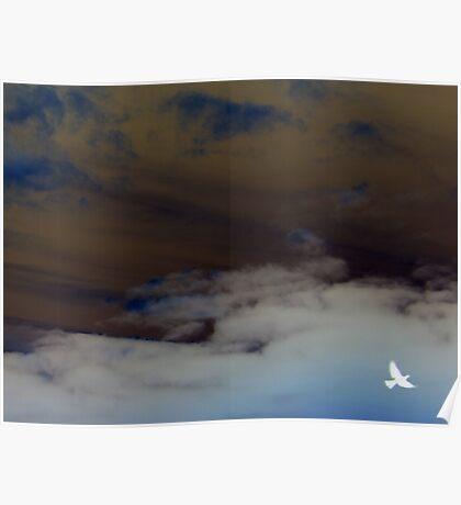 hope (clouded sky, white bird flying free) Poster