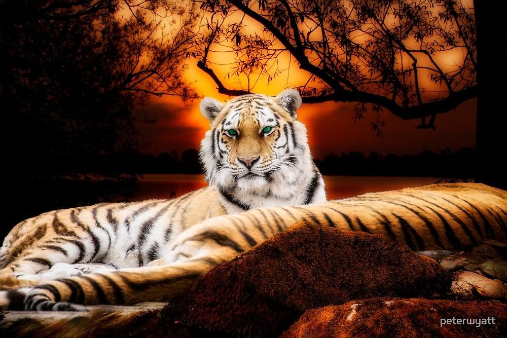 green eyed tiger by peter wyatt