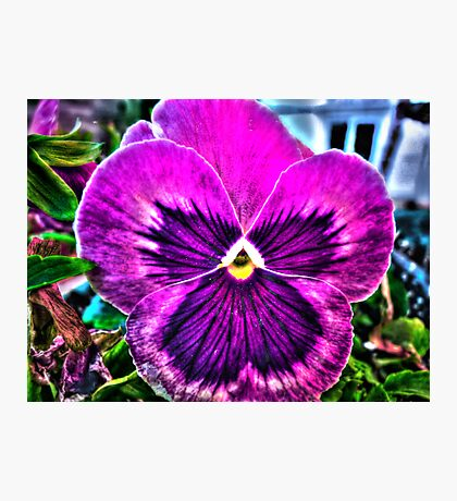 What a Pansy Photographic Print