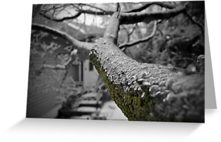 Mossy Ice by JAGgedEdgePhoto