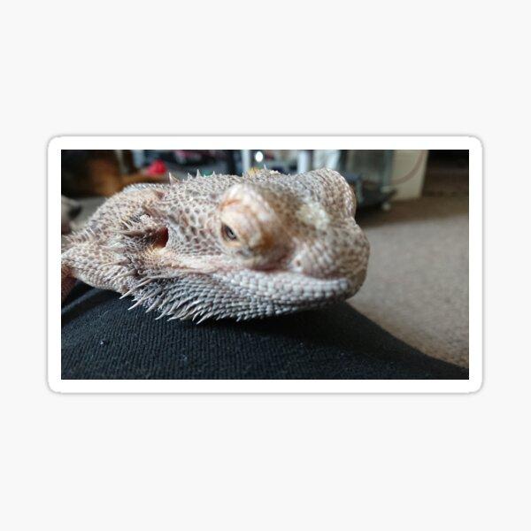 Bearded dragon head closeup  Sticker