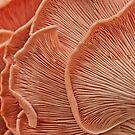 Marvelling the Mushroom: Tidal by Marilyn Cornwell