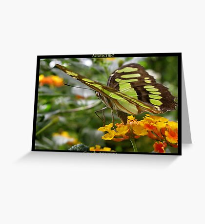 Butterfly (South America) ~ Malachite II Greeting Card