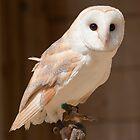 Barn Owl by Cliff Williams
