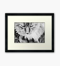 Feline Tranquility  Framed Print