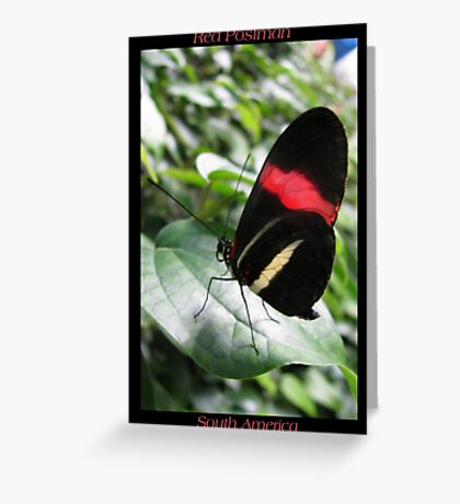 Butterfly (South America) ~ Red Postman II Greeting Card