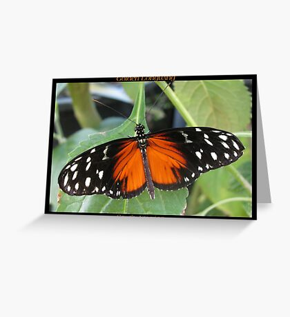 Butterfly (South America) ~ Golden Longwing II Greeting Card