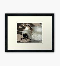 Dingle! Framed Print