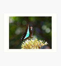 Blue triangle butterfly Art Print