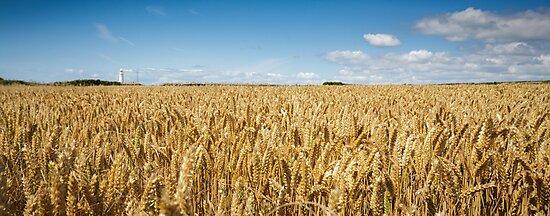 Nash Point Lighthouse and Golden Wheat Fields by Heidi Stewart