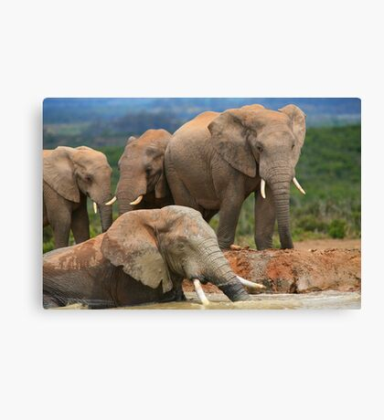 Afternoon Bath - African Elephants Canvas Print