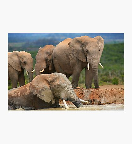 Afternoon Bath - African Elephants Photographic Print
