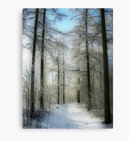 A Path in the Snow Canvas Print