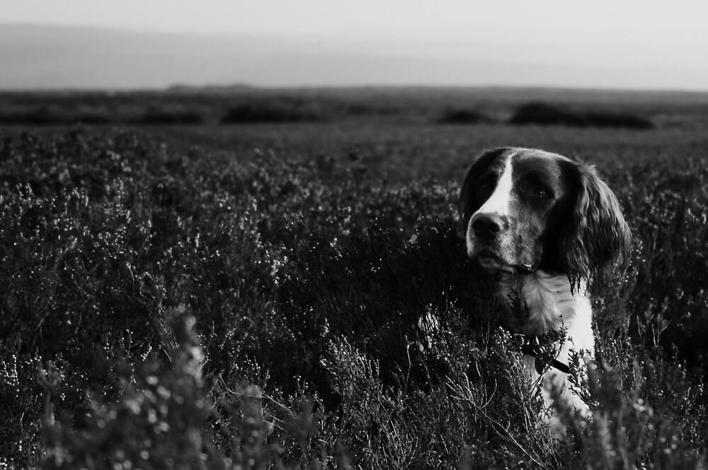 Spice Dog Portrait by Matthew Tyrrell